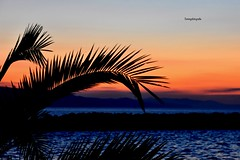 Palmtree in the Sunset (Tommysfotografie) Tags: aftersunset nightfall landscapephotography landscapephoto landscapeshot landscapepicture landscapeperfection landscapeview adria adriaticsea adriatic adriatico makarskareviera dalmatiancoast dalmatia croatianreviera croazia hrvatska croatia zee sjø meer mer mar mare seacoast seascape seaview sea zonsondergang sonnenuntergang solnedgång solnedgang coucherdesoleil puestadesol pordosol tramonti tramonto sunsetshot sunsethunter sunsetlove sunsetpicture sunsetperfection sunsetphotography sunsetphoto sunsetview sunsets sunset framed frame treevibes tree palmleaf leaf palm palmtree