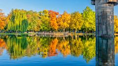 Autumn colors and reflections (Milen Mladenov) Tags: 2019 landscape montana montanesiumpark alley autumn citiy leaves nature park path road seasonal