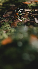 Different perspective (thedrowsy) Tags: nature forestal floor forest woods forests scandinavia 85mm a7riii green tones mood moody autumn fall bokeh faded film look grain sweden swe sverige norrland jämtland