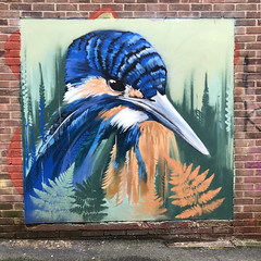 Kingfisher by Faunagraphic, Sheffield 2019 (Dave_Johnson) Tags: kingfisher bird faunagraphic mural graffiti streetart art artist brownlane publicart sheffield southyorkshire yorkshire