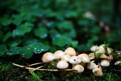 Pilze und Klee! (Anna Abendroth) Tags: rügen island ostsee insel balticsea