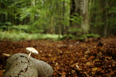 Pilz und Ast (Anna Abendroth) Tags: rügen island ostsee insel balticsea