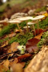 Pilze, Moos und Raupe!!! (Anna Abendroth) Tags: rügen island ostsee insel balticsea