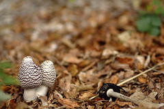 Pilze (Anna Abendroth) Tags: rügen island ostsee insel balticsea