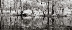Tranquility at the pond (Geir Bakken) Tags: serenity tranquility pond water reflection longexposure mamiya mamiyarb67 rb67 rolleirpx25 rolleirpx rollei fomadonp film filmisnotdead filmphotography filmcamera filmisalive 135film 135 trees forest nature mediumformat panorama panoramic blackandwhite bw perfectbeauty