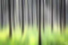 ICM (Bram de Jong) Tags: icm intentionalcameramovement experiment forest bannink deventer ngc
