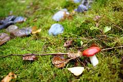 Steine, Pilze und Moos! (Anna Abendroth) Tags: rügen island ostsee insel balticsea