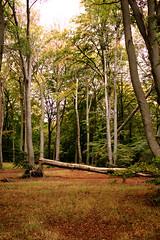 Wald (Anna Abendroth) Tags: rügen island ostsee insel balticsea