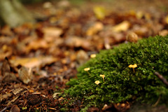 Moos und Pilze (Anna Abendroth) Tags: rügen island ostsee insel balticsea