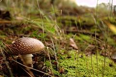 Pilz und Moos (Anna Abendroth) Tags: rügen island ostsee insel balticsea