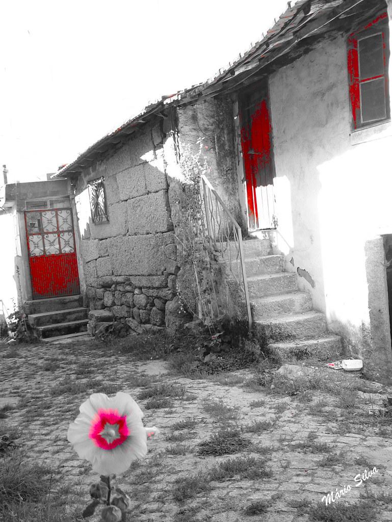 Águas Frias (Chaves) - ... a flor e as portas vermelhas ...