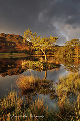 Light, Moody Skies & Autumn Colours (jeanette_lea) Tags: landscape united kingdom the lone tree rydal water cumbria sunrise dawn lowlight autumn colours reflections grass fells sky clouds lake district