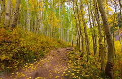 Fall Sprinkles (KC Mike Day) Tags: hiking trail lake crater aspen colorado dirt path trees autumn fall leaves changing bells maroon