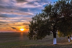Colourful evening (Daniel Boca) Tags: landscape sunset nature sky clouds trees field colours colour blue orange yellow green branches leafs sunlight outdoor outside country countryside sun rays