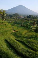 DSCF0221 (Indonesia Documentary Photographer) Tags: tabanan bali landscape unesco worldheritage riceterrace jatiluwih