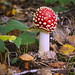Fly agaric (and friend)