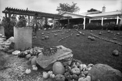 Kodak 2366 - Super Monobath Test (Leslie Lazenby) Tags: kodak 2366 supermonobath fpp filmphotographypodcast project labbox olympus om2n zuiko 24mm rimelspach farm fremont ohio