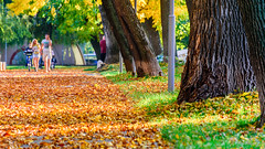 Autumn alley in the park (Milen Mladenov) Tags: 2019 landscape montana montanesiumpark alley autumn citiy leaves nature park path road seasonal