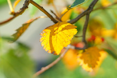 from skp-mm (skp-mm) Tags: 50mm blätter bokeh farben herbst ilce7rm4 nature orange sony sonyalpha7riv a7riv α7riv stuttgart badenwürttemberg deutschland