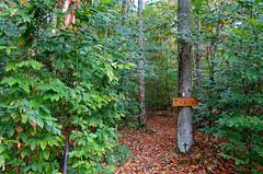 Walk in the woods, Dalton NY (I like green) Tags: woods forest autumn dalton ny
