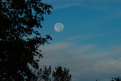 Hunter's Full Moon - October 15, 2019 (spacemike) Tags: moon luna lunar space astronomy astrophotography crater craters mare sky nightsky charlotte northcarolina charlottenc charlottenorthcarolina spacemike astromike fullmoon north gibbous moongibbous waxingmoon gibbousmoon huntersmoon trees sunrise dawn earlymorning clouds cloud haze fog mist rain storm waninggibbous waninggibbousmoon october 2019