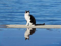 Sea cat. (Vitaly Giragosov) Tags: pet cat sevastopol crimea кот севастополь крым