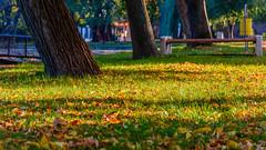 Autumn in our park (Milen Mladenov) Tags: 2019 landscape montana montanesiumpark alley autumn citiy leaves nature park path road seasonal