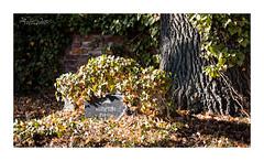 Ruhestätte (alexander_winter@ymail.com) Tags: canoneos6d sachsenanhalt germany deutschland dessau familie grabmal tomb grave grab