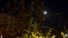 14 - Improvisar (JLuque Fotografía) Tags: moon light tree night improvise photober full