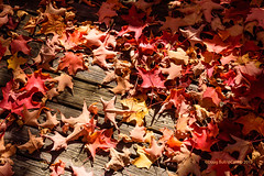 Fall 20019 (caribb) Tags: 2019 abstract fall autumn color colour colorful colourful pretty nature garden sunny bright leaves fallleaves mapleleaves mapleleaf deck canada