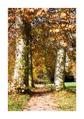 Way through (alexander_winter@ymail.com) Tags: landschaft wörlitz tree canon germany deutschland unesco baum weg dessau sachsenanhalt