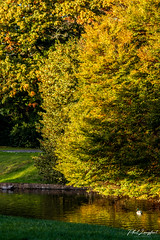 Sefton Park October 2019 (Phil Longfoot Photography) Tags: parks park liverpool toxteth merseyside nature naturephotography naturephotos ornamental ornate fountains fountain gardens landscapes landscape lakes lake