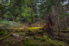forest series #405 (Stefan A. Schmidt) Tags: forest tree moss france vosges
