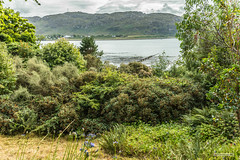 Shrubs meet the sea at Inverewe Gardens, Loch Ewe, Wester Ross. (Scotland by NJC.) Tags: beach strand coast seaside côte shore coastline seashore litoral linea costiera küste 海岸線 seaboard 海岸线 해안선 hill deal colina colline bakke heuvel brdo tepe backe kopec 小山 ås wzgórze mäki landskabet холм đồi coğrafya пагорб تَلّ forhøjning เขาเตี้ยๆ by dorf village pueblo vila sat dorp köy aldeia vesnice село 村庄 деревня χωριό kylä wieś làng landsby 村 마을 หมู่บ้าน قَرْيَة flower flor blomma 花 hoa çiçek cvijet ดอกไม้ квітка زَهْرَة inverewegardens lochewe poolewe westerross scotland