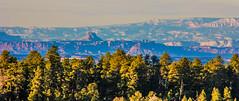 Utah from Arizona (Buck--Fever) Tags: arizona arizonawonders kaibabplateau northkaibabnationalforest utah tamron18400lens telephotolenscompression canon60d pinetree trees landscape earthnaturelife northernarizona southernutah mountains