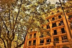 Big tree (thomasgorman1) Tags: tree trees building street brown brownish monochrome barcelona nikon city