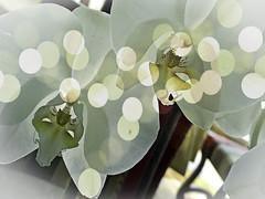 Sparkling Orchid (soniaadammurray - On & Off) Tags: iphone manipulated experimental collage picmonkey photoshop abstract flowers orchids nature interior shadows reflections beauty look appreciate hbw bokeh artchallenge bokehwednesdays