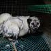 Lapua - Fur farm - 2019-8 - DSC_2981-1