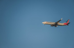 america airlines flight aa 1113 arriving at sjc from dallas (pbo31) Tags: bayarea california nikon d810 color october 2019 boury pbo31 autumn airport airline aviation plane travel flight sanjoseminetainternationalairport sjc sanjose southbay boeing 737 blue american arriving