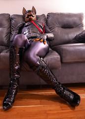 DSC06217 (Kory / Leo Nardo) Tags: rubberdawg dawg pup pupplay pupleo rubber mask lycra spandex unitard bodysuit tights nylon heels kneehigh boots lace collar leash dobie doberman dobbie gloves tail leohex crossdress cd