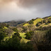 Sun Break in Sunol