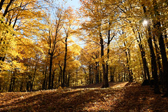 autumn (xophe_g) Tags: autumn colors quebec easterntownships sutton mount x100f yellow forest