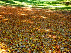 Fall Carpet (Stanley Zimny (Thank You for 45 Million views)) Tags: fall autumn leaves carpet seasons color