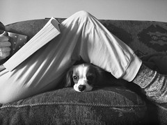 Best Kind of Morning (Doris Burfind) Tags: blackandwhite portrait people animal pet dog reading relaxing lounging coffee morning puppy cavalierkingcharlesspaniel