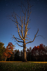 In the Moonlight (jcernstphoto) Tags: davis wv westvirginia blackwaterfalls state park astrophotography tree autumn fall night sky stars