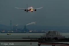 MAK-7789 (oga_mak) Tags: makogawauchi ogamak 東京都 日本 500mm eos canoneos eos1dxmarkii canon myeosphoto airport aircraft airplane aviation aviationphotography igairplaneclub boeing b789 boeing787 boeing787dreamliner dreamliner allnipponairways hanedaairport hikoukiclub キヤノン 羽田空港 飛行機撮り隊 飛行機大好き 飛行機写真 飛行機のある風景 飛行機・