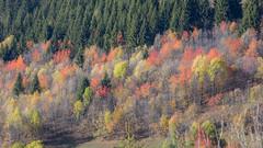 Mélange de couleurs automnales. (Rouvier Jean Pierre) Tags: automne valdarly couleurs feuilles