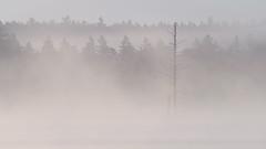 kidney pond (jtr27) Tags: dscf7503xl5 jtr27 kidney pond baxter state park maine mist fog minimalism landscape manualfocus nikkor 300mm f45 edif