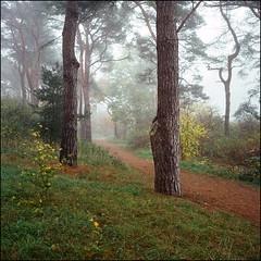 The local Park - Kodak Ektar 100 (magnus.joensson) Tags: sweden swedish skåne autumn fog road haze november rolleiflex carl zeiss tessar 75mm kodak ektar 100 exp 6x6 medium format c41