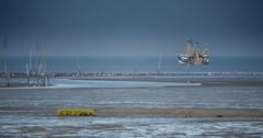 Shrimp Boat on work (Zoom58.9) Tags: sky ocean sea river water boat shrimpboat seascape coast mudflat outside europe germany himmel meer fluss wasser boot krabbenkutter seelandschaft küste wattenmeer draussen europa deutschland niedersachsen dorum sony sonydscrx10m4